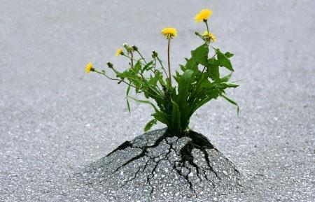 Determinazione caparbietà tenacia mai mollare